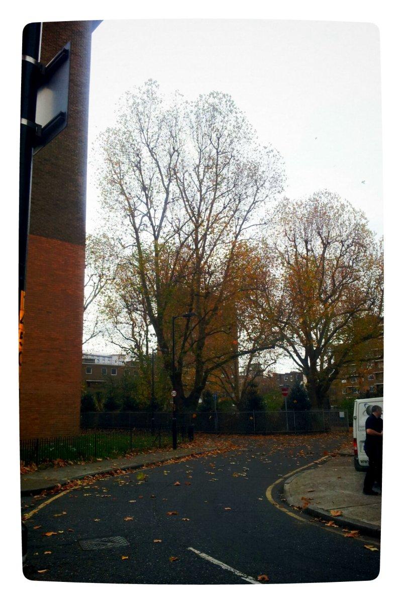 the UNCATEGORIZED: autumn leaves a bye