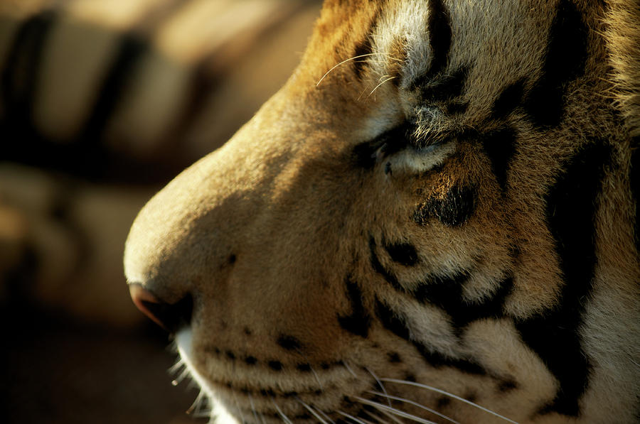 The real life of pi an interview with richard parker for Who is richard parker