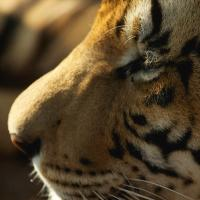 The REAL life of PI : An interview with Richard Parker [DAILY PROMPT]